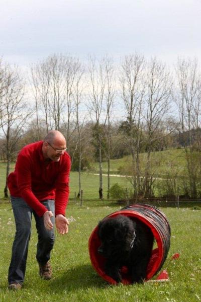 agility-chien-educateur-canin-nantes