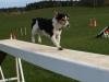 agility-chien-jackrussel-educateur-canin-belz