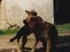 comportementaliste-canin-educateur-canin-mr-panchaud