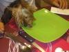 comportementaliste-canin-hierarchie-coueron