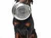 chien reclamant sa nourriture