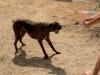 educateur-canin-comportementaliste-comment-jouer-hennebont