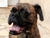 educateur-canin-comportementaliste-lorient
