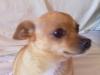 educateur-canin-comportementaliste-muzillac