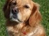 educateur-canin-toute-race-erdeven
